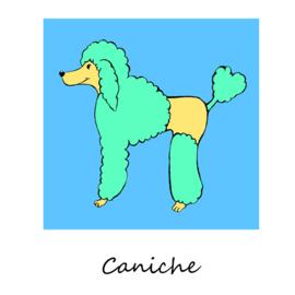 Hond - Poedel - blauw