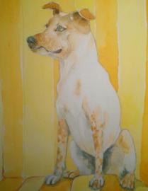 Cadeaubon huisdier in aquarel 20cm x 20cm