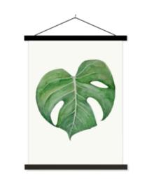 Schoolplaat Philodendron II