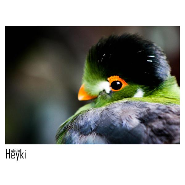 Tropische vogel - XL