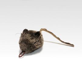 Tabby Tijger - Mouse Spitz