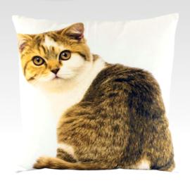 Curious Tabby - Canvas Cushion