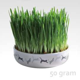 Cat-Grass seeds in Ceramic Bowl