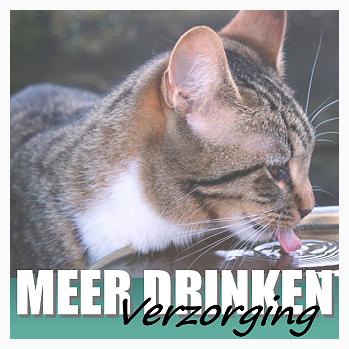 Waarom wil mijn kat niet genoeg drinken? 5 redenen en hoe je het oplost