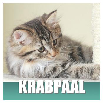Klik hier voor Krabpalen en Krabplanken van Cats & Things