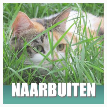 Klik hier voor kattenluikjes, kattenriempjes en Veilig Buiten voor je kat