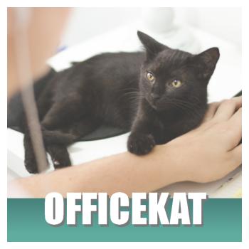 Klik hier voor kattenspullen op je kantoor