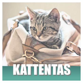 Klik hier voor je katten accessoires, helemaal voor jezelf