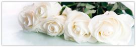 Blanco - Witte Rozen