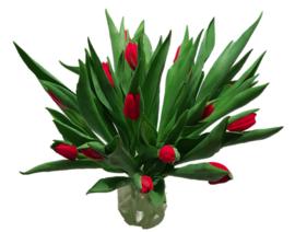 Tulp - rood - 20 stuks