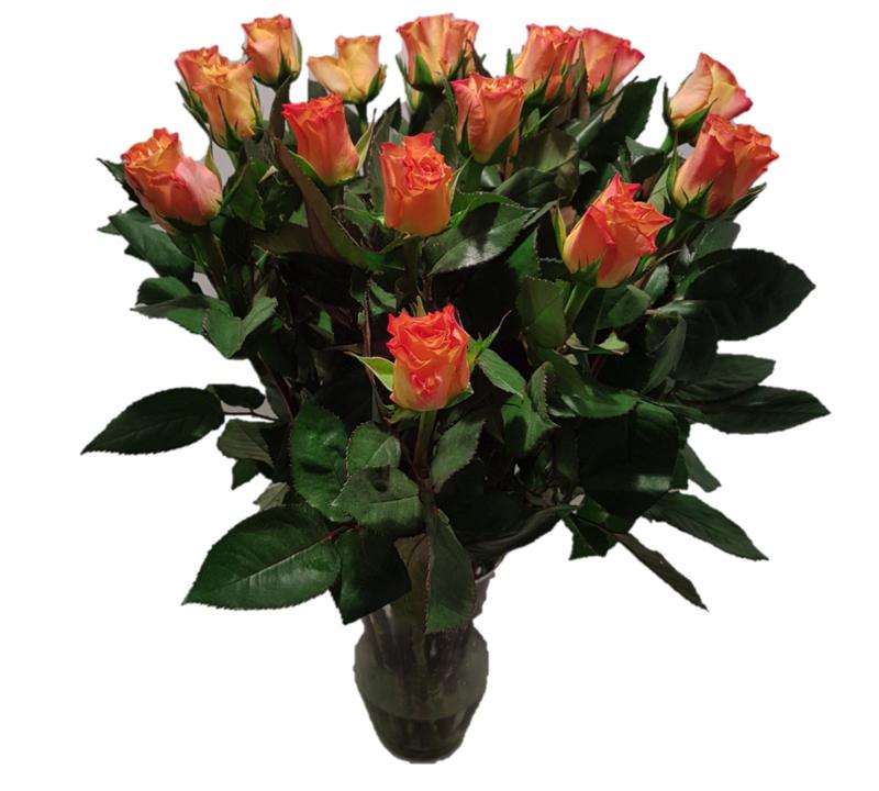 Roos - oranje - 10 stuks