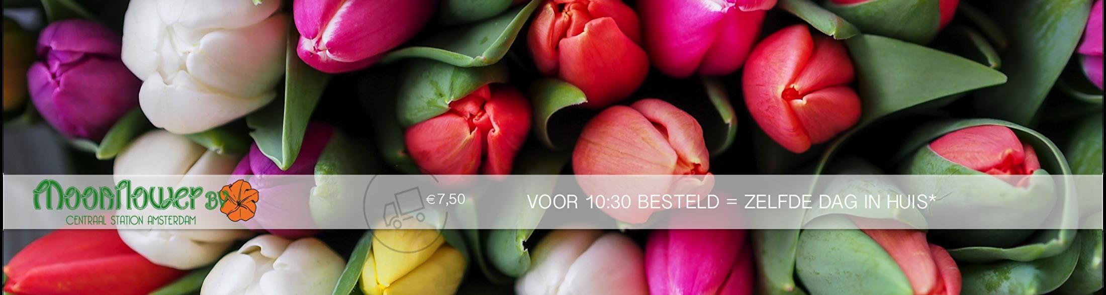 Tulpen van Moonflower