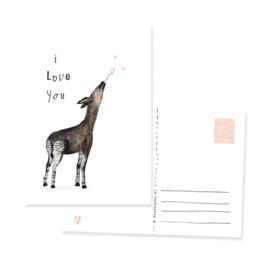ansichtkaartje okapi I love you