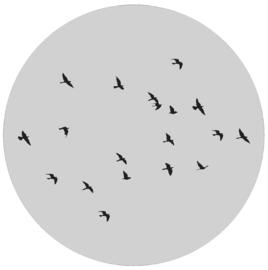 Label-R | Muurcirkel Birds (grijs)
