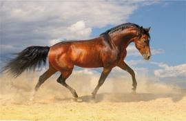 Bureaulegger paarden Q {2776}