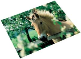 """Bureaulegger """"paard portret"""" (6404)"""