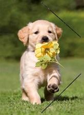 "Kunststof glossy elastomap A4 ""puppy bloem"" (3276)"