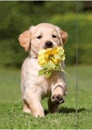 """Dieren elastomap A3 """"puppy bloem"""""""