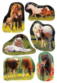 Herma 5443 paardenstickers (5012)