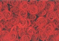 Rode rozen kaftpapier (0484)