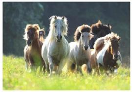 3D paarden bureaulegger amazone