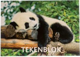 A4 tekenblok 120gr panda (4386)