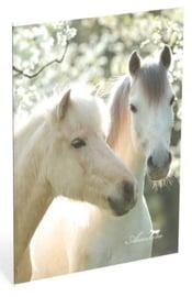 Amazone schrift A4 geruit wit paard (4026)