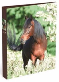 Amazone ringband 2r bruin paard (3543)