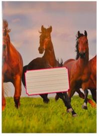 """Kangaro schoonschrijven schoolschrift """"paard"""" (4454)"""