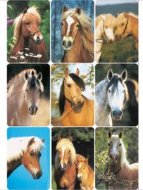 Herma 3568 paardenstickers