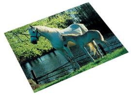"Bureaulegger ""paard bij hek"" (6459)"