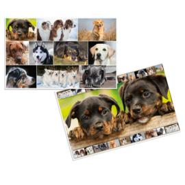 Bureaulegger honden (3788)