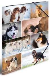 Honden elastomap A3 (2187)