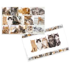 Bureaulegger katten (3795)