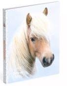 My favourite friends PP mapje 2r paard stippen (7982)