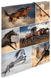 Paarden elastomap A4 (2095)