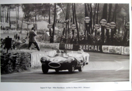 Jaguar D-Type -Mike Hawthorn - 24 Hrs Le Mans 1955 (Winner)