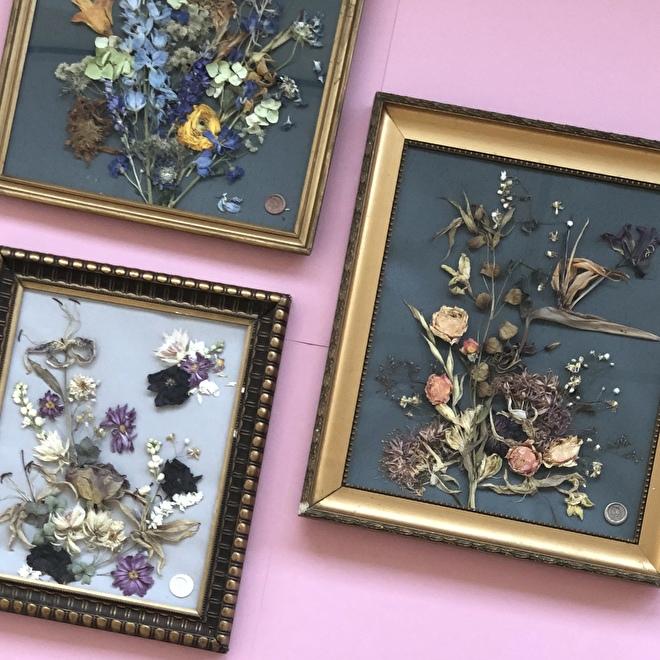 fleurs sechees dans un cadre