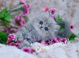 Kat met roze bloemen