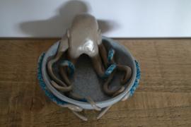 Oktopus Schaaltje