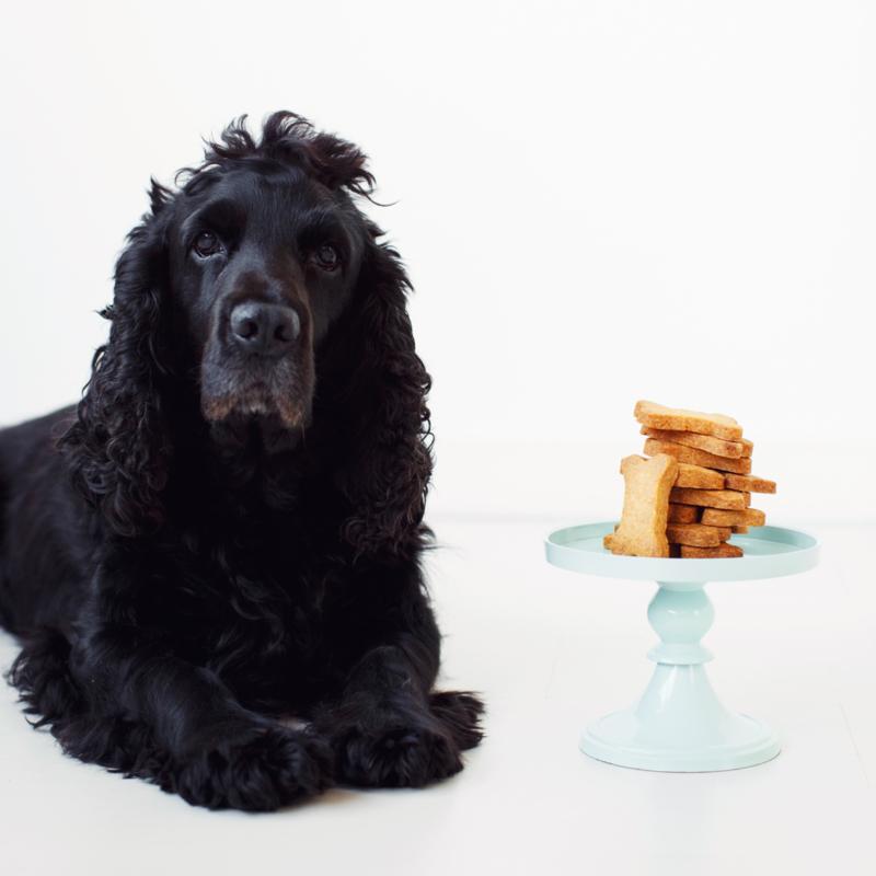 DIY bakpakket voor Hondenkoekjes