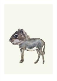 Ezelhoorn- Judith Koning