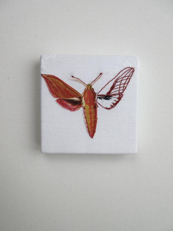 Groot avondrood vlinder