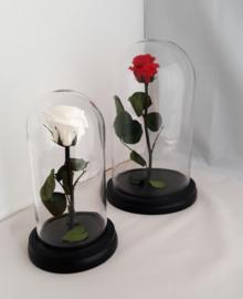 Opgezette roos wit kleine stolp