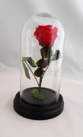 Präparierter Rote Rose im kleine Glocke