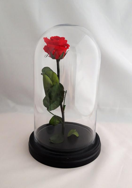 Präparierter Rote Rose im Große Glocke