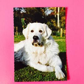 Hond 15