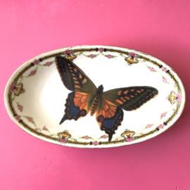 Ovale schotel vlinder