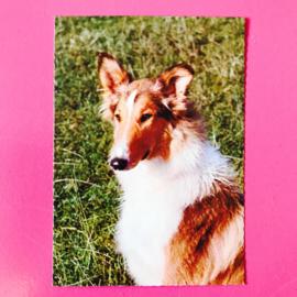 Hond 14