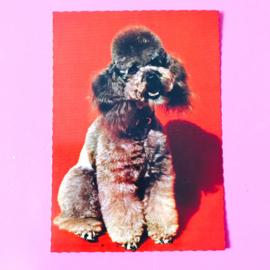 Vintage kaarten honden